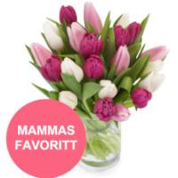 Blanding av lilla, rosa og hvite tulipaner