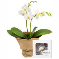 Orkide og sjokolade