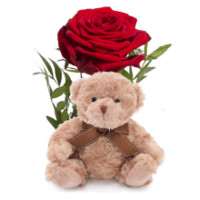 Rød rose og bamse