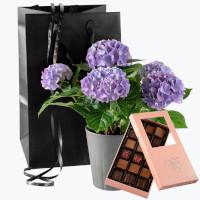 Skjønnhet med potte og Sjokoladefristelse